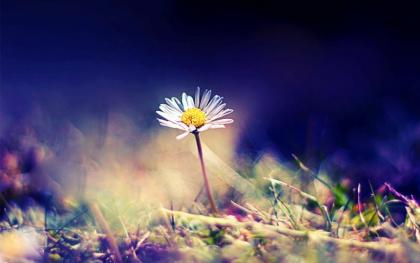 Bên đồi cỏ may (thơ 4 câu -dp) 0110