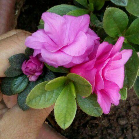 Una Delicada Flor 28577510