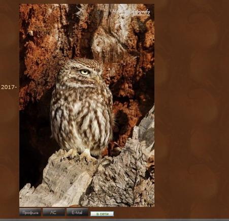 Инструкция по размещению изображений и видео на форум 813