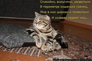 Смешные картинки! Kotoma12