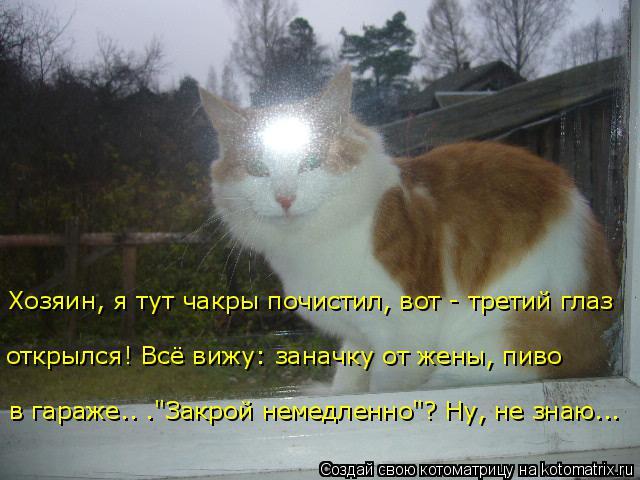 Смешные картинки! - Страница 2 Kotoma13
