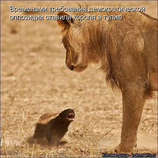 Смешные картинки! - Страница 2 Kotoma15