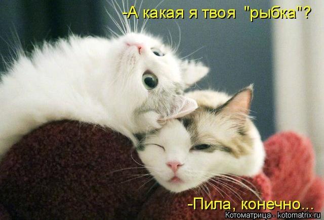 Смешные картинки! - Страница 2 Kotoma17