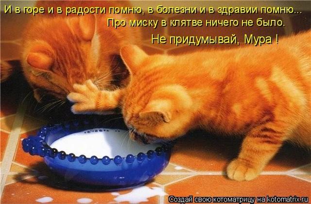 анекдоты  Kotoma19