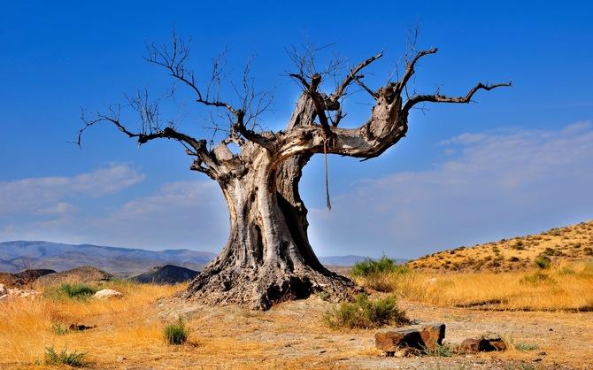 Перенос болезни на сухое дерево 36493a10