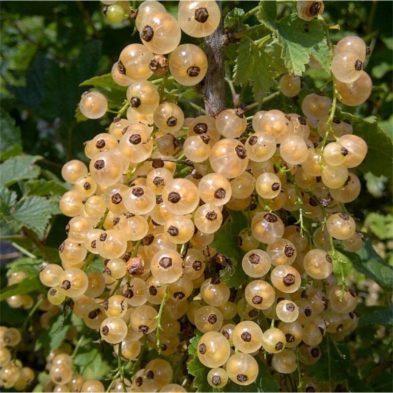 Mùa Xuân Nói Chuyện Lan Rừng Việt Nam Fruit-10