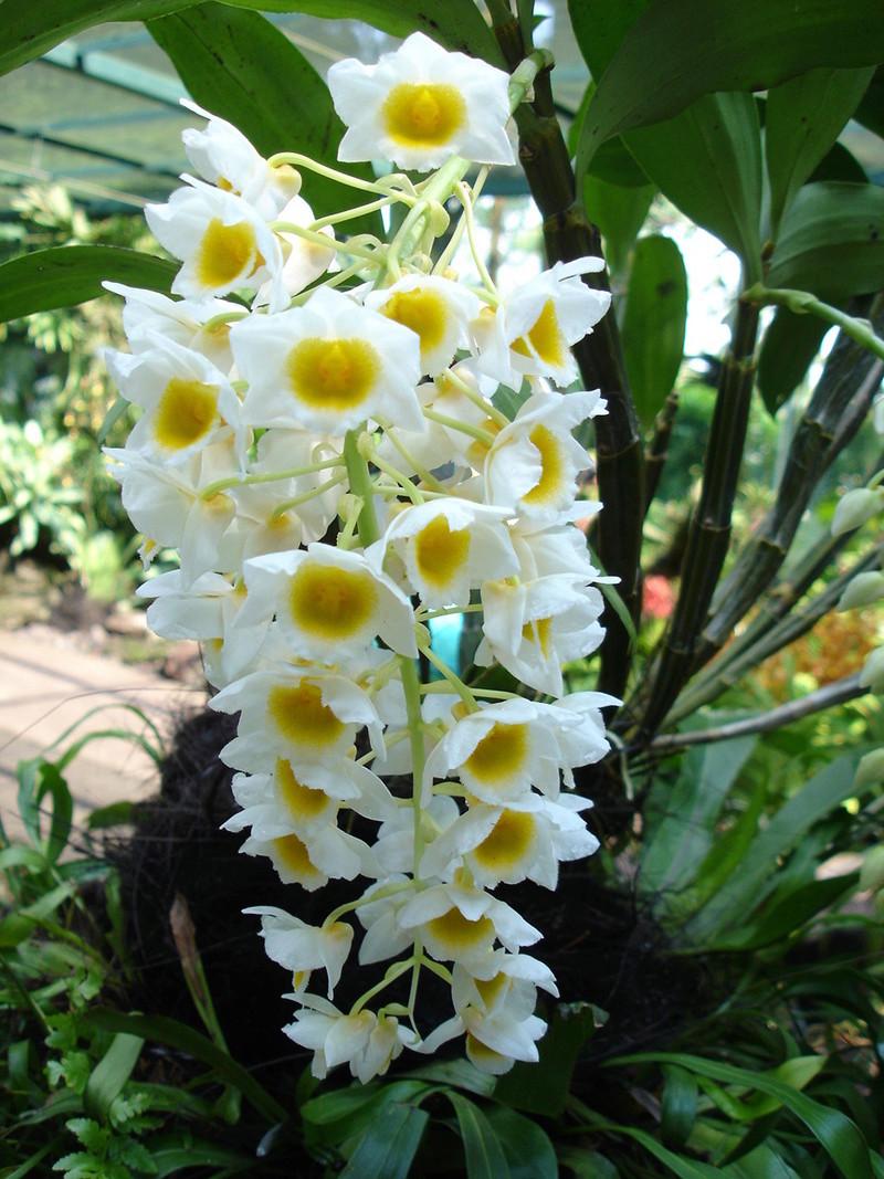 Mùa Xuân Nói Chuyện Lan Rừng Việt Nam Orchid10