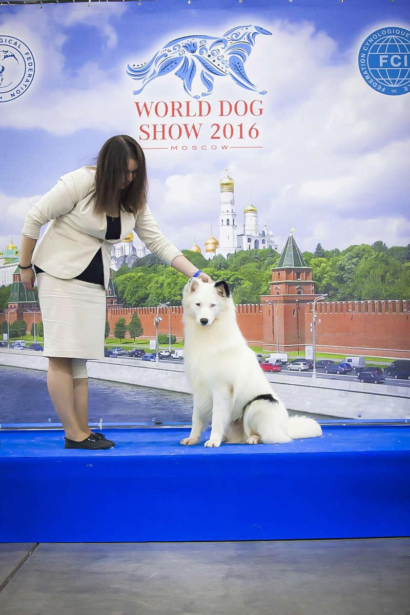 Породный Форум Якутская Лайка - Портал Img_2511