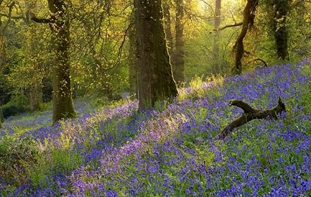 Ambiente primaveral Primav10