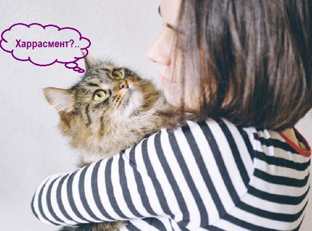 Кошки и прочие забавные животные  - Страница 7 Aeeiez10