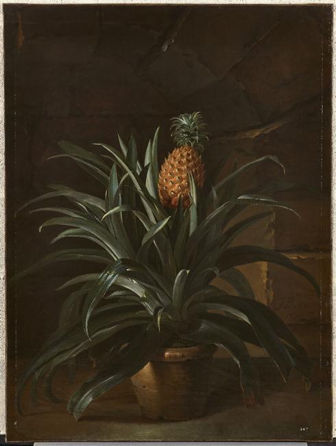 L'ananas, le fruit roi 18-50410