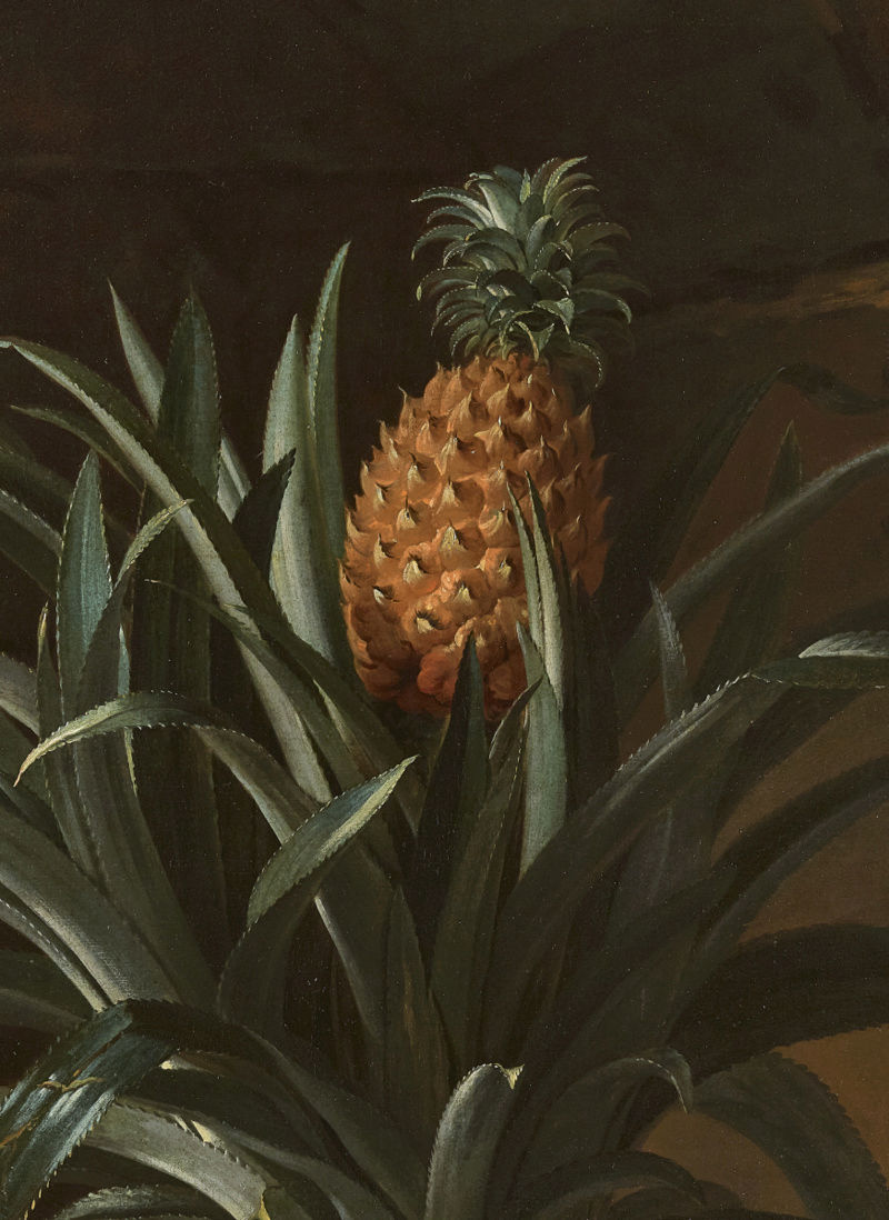 L'ananas, le fruit roi Mv-70310