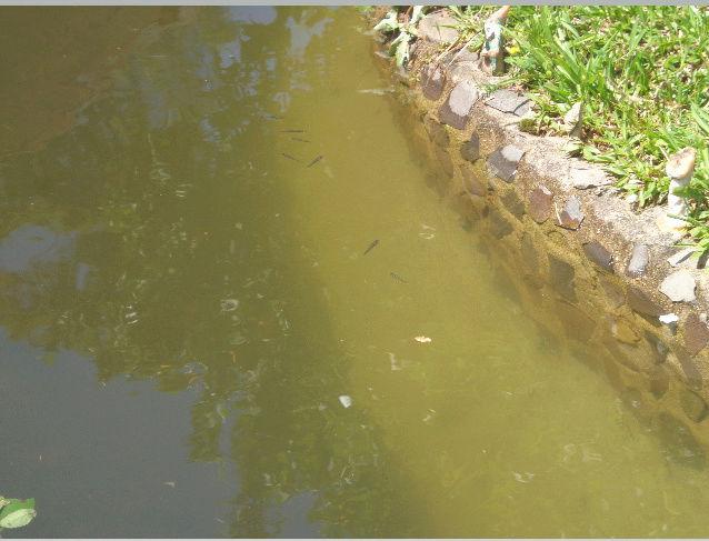 O meu lago Zzzzzz10