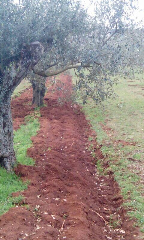 Sistemas de manejo de suelos - Página 10 Oljke_14