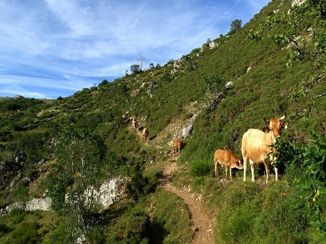 PARQUE NATURAL DE SOMIEDO - Viagem de Verão Dsc09113