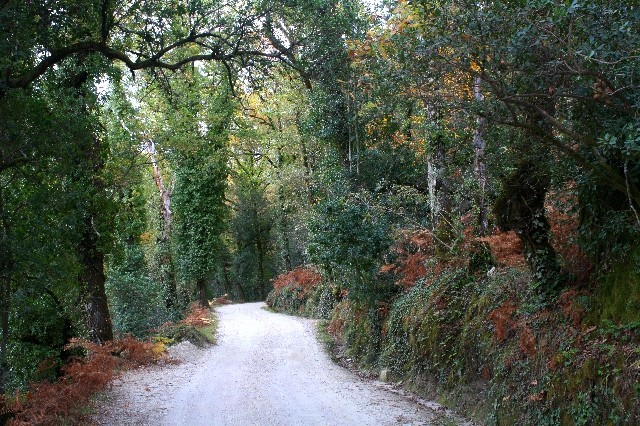 Outono no Gerês Img_1116