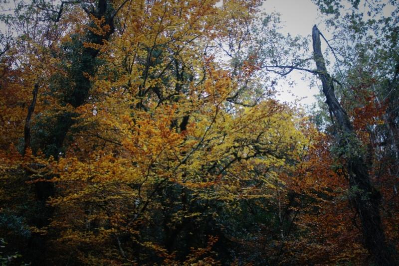 Outono no Gerês Img_1120