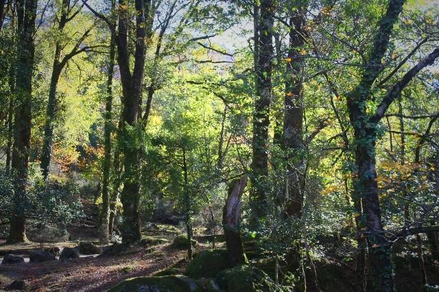 Outono no Gerês Img_1121