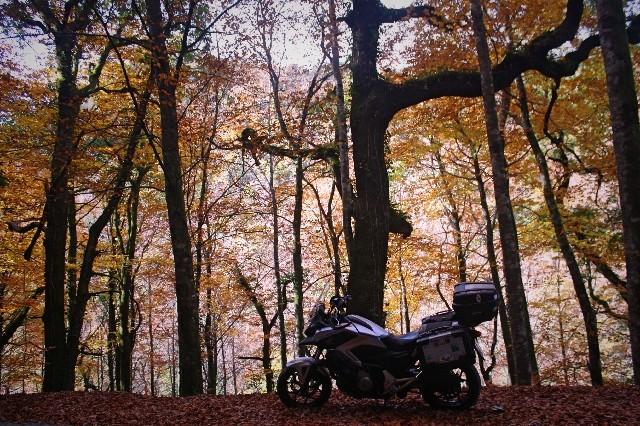 Outono no Gerês Img_1210