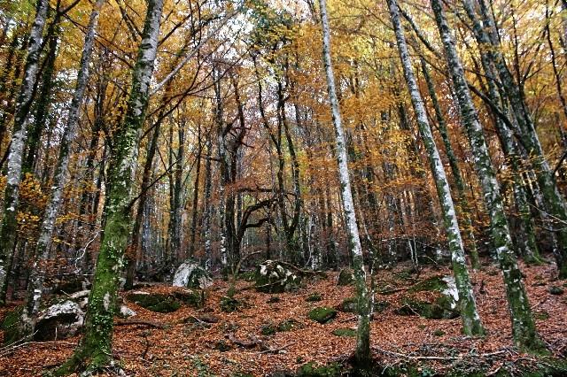 Outono no Gerês Img_1211