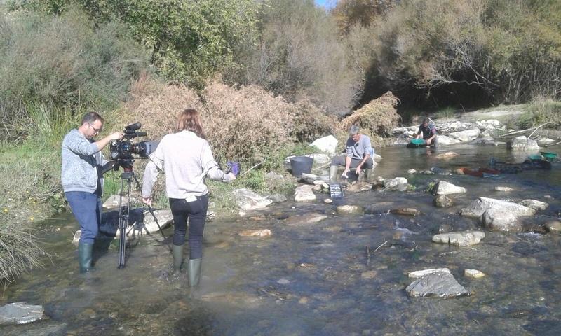 Bateo de oro en el rio Genil, Cenes de la Vega (Granada) - Página 2 0fdc6f10