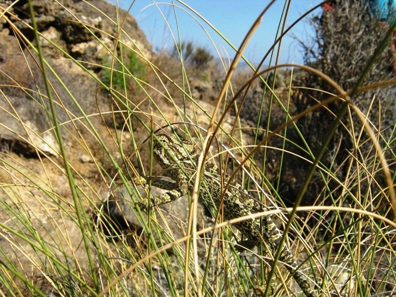 MINAS DE LOS FIGUERAS - CUEVA DEL PAJARO - CARBONERAS (Almería) Fig01610