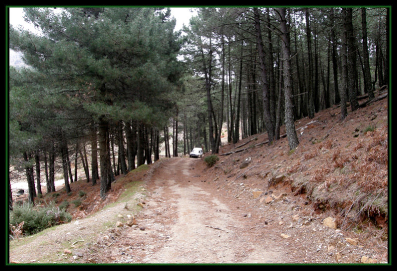 MINAS DEL ROBLEDAL – IGUALEJA (Málaga)  LUDWIGITA/LUDWIGITE Rob310