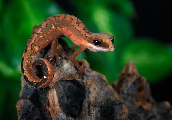Recherche de petites espèces ! Felinu11