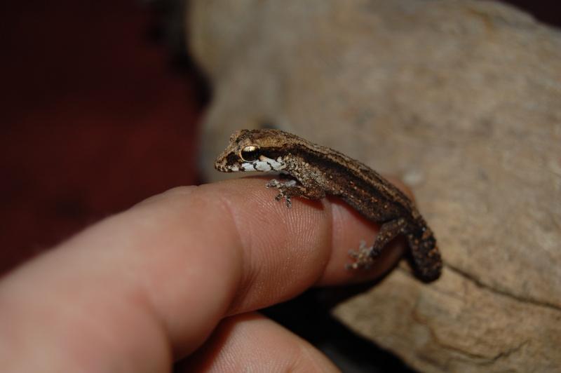 Recherche de petites espèces ! Paroed11