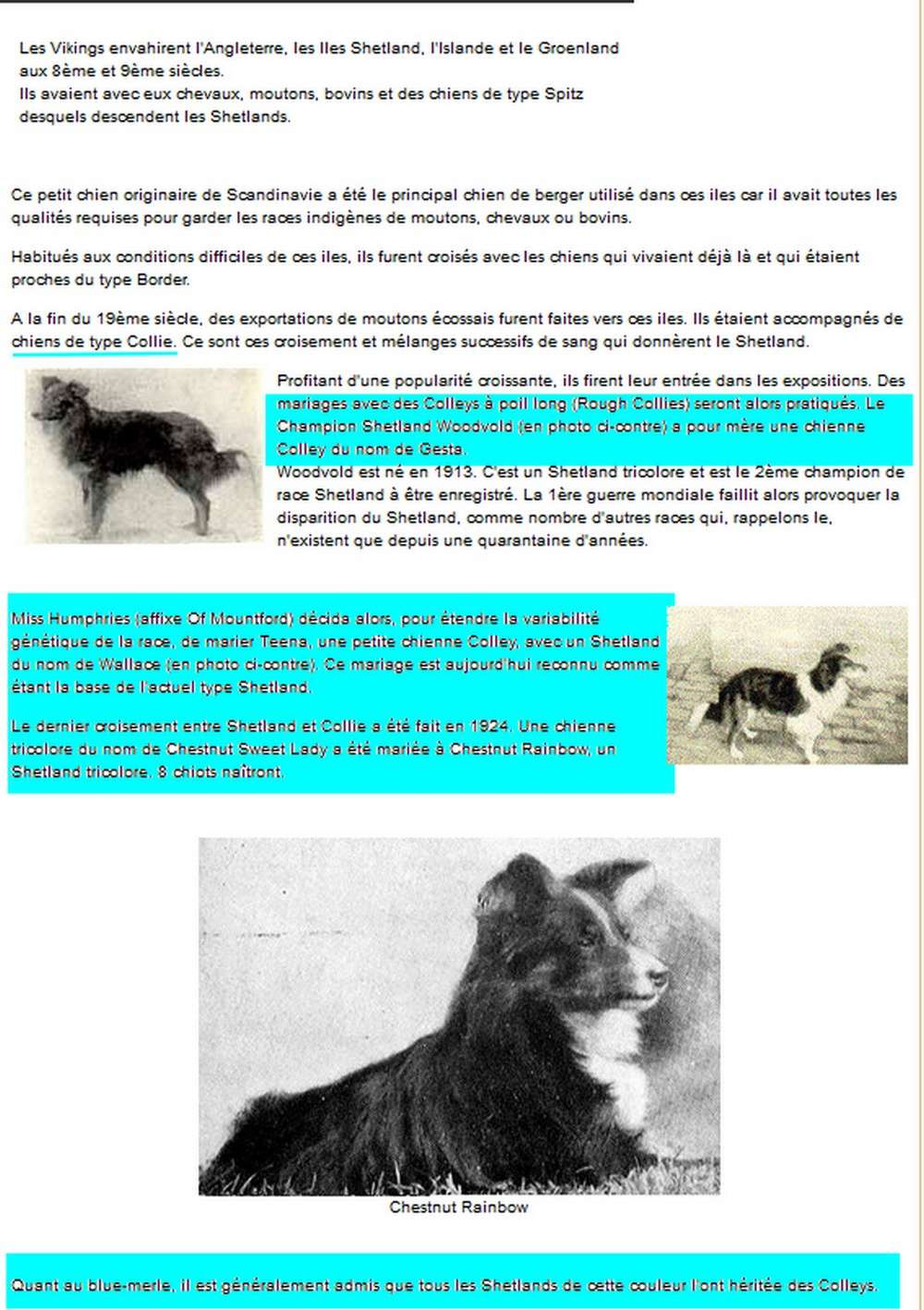 histoire des colleys et shetland sheepdogs blancs. Collie10