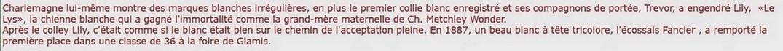 Collies, Shelties, et Compagnie.... Glasgo22