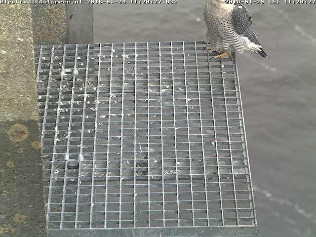 Aalsmeer/Watertoren. Youngster en Sidonia - Pagina 4 Watert19