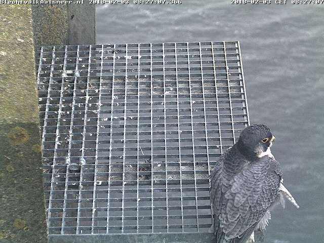 Aalsmeer/Watertoren. Youngster en Sidonia - Pagina 4 Watert20