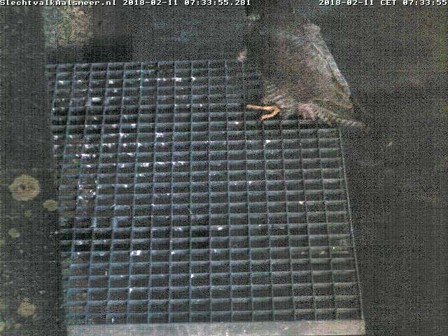 Aalsmeer/Watertoren. Youngster en Sidonia - Pagina 5 Watert21