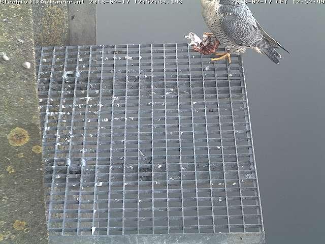 Aalsmeer/Watertoren. Youngster en Sidonia - Pagina 6 Watert27