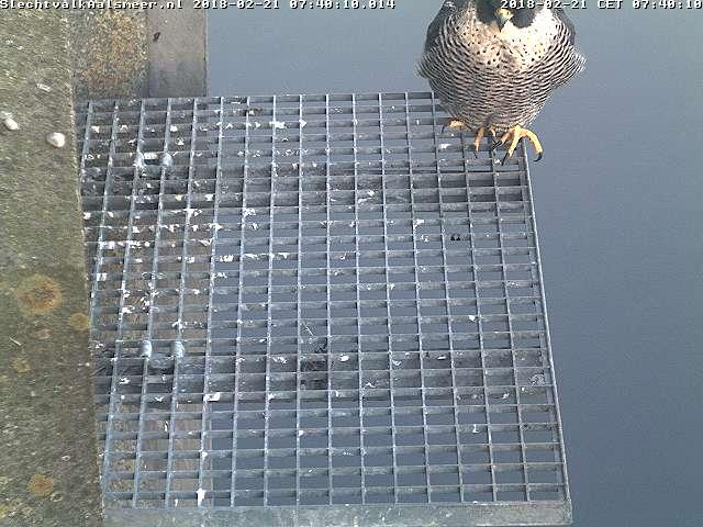 Aalsmeer/Watertoren. Youngster en Sidonia - Pagina 6 Watert34