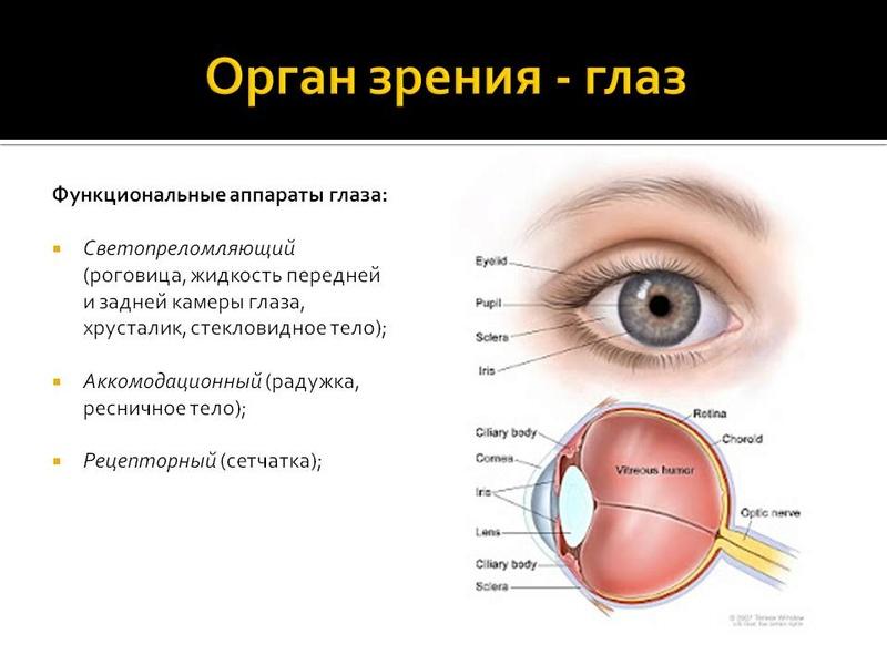 Исцеление зрения - Страница 2 00510