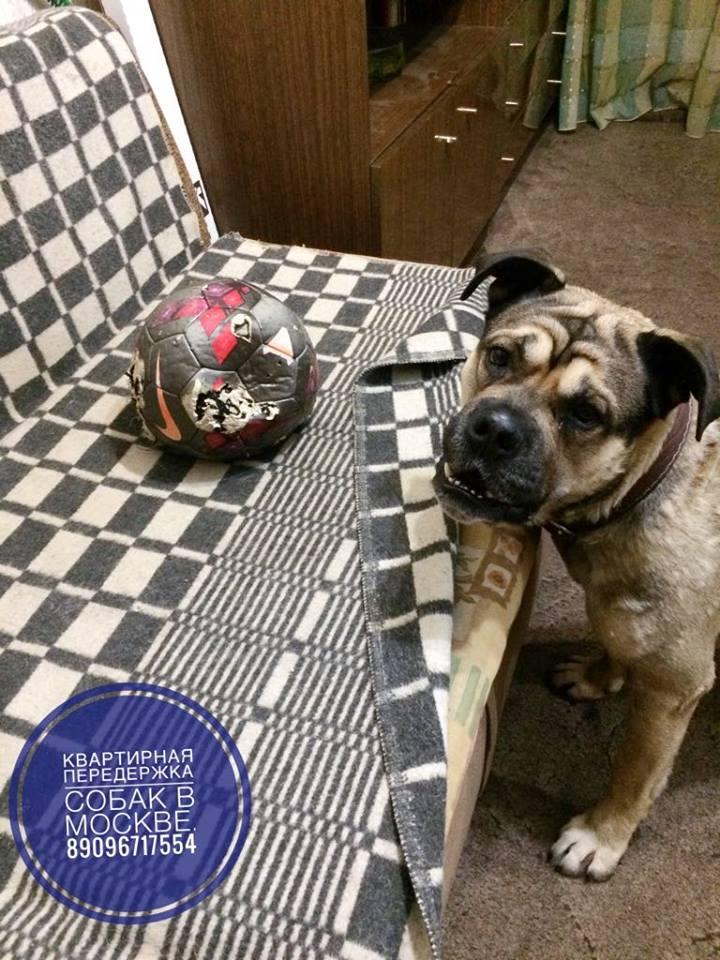 Передержка собак любых пород в Москве (СВАО) - Страница 5 2310