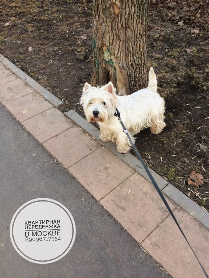 Передержка собак любых пород в Москве (СВАО) - Страница 5 Eaza1310