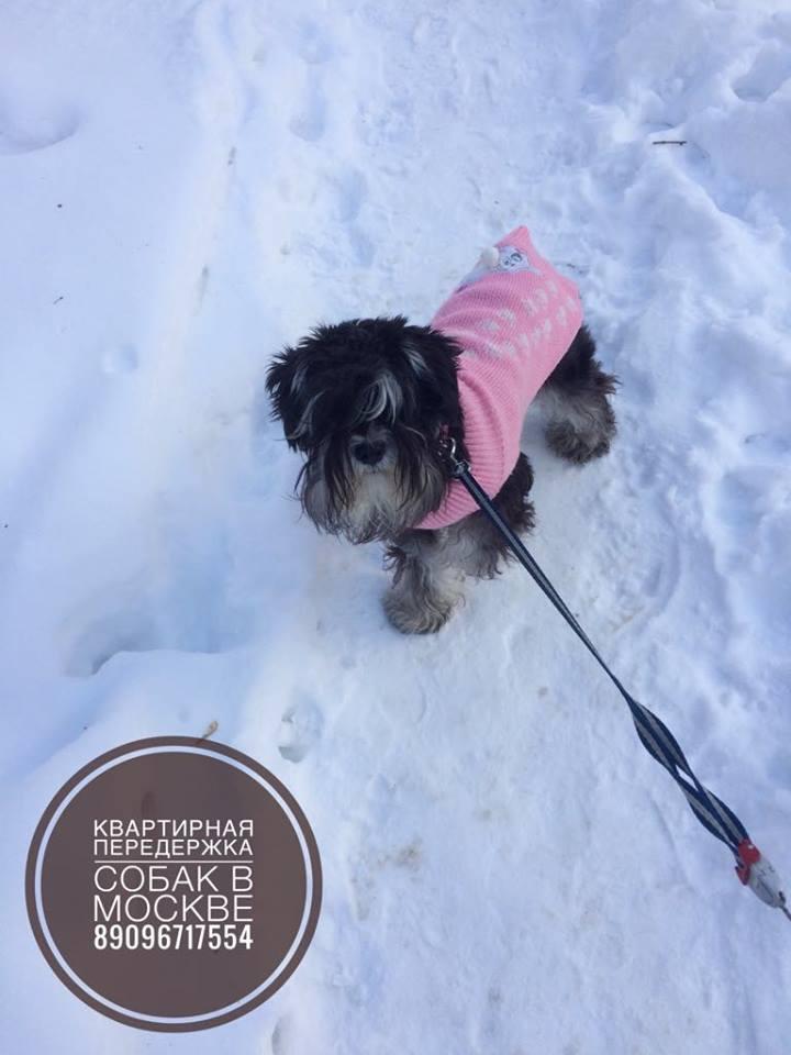 Передержка собак любых пород в Москве (СВАО) - Страница 5 Ie1010