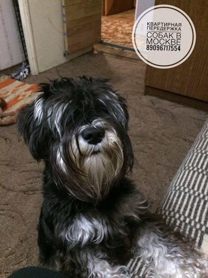 Передержка собак любых пород в Москве (СВАО) - Страница 5 Ie310
