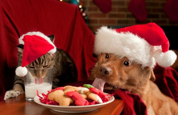 Приметы в новогоднюю ночь 2018 года – что нельзя делать в преддверии года Желтой собаки Holida10