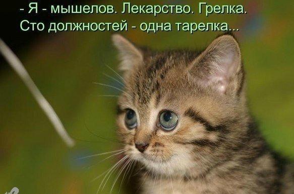 Юмор, приколы... - Страница 8 Urekok10