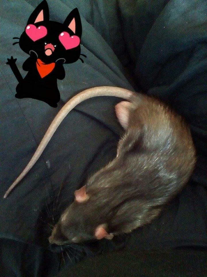 Conan et Splinter, mes deux amours 18034611