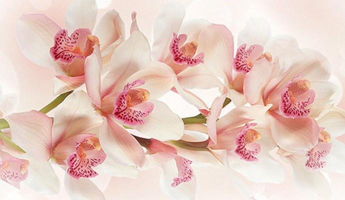 Поздравление на день рожденья как орхидея