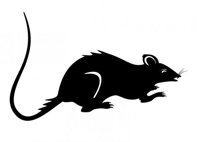 y en à plein Rat-si10