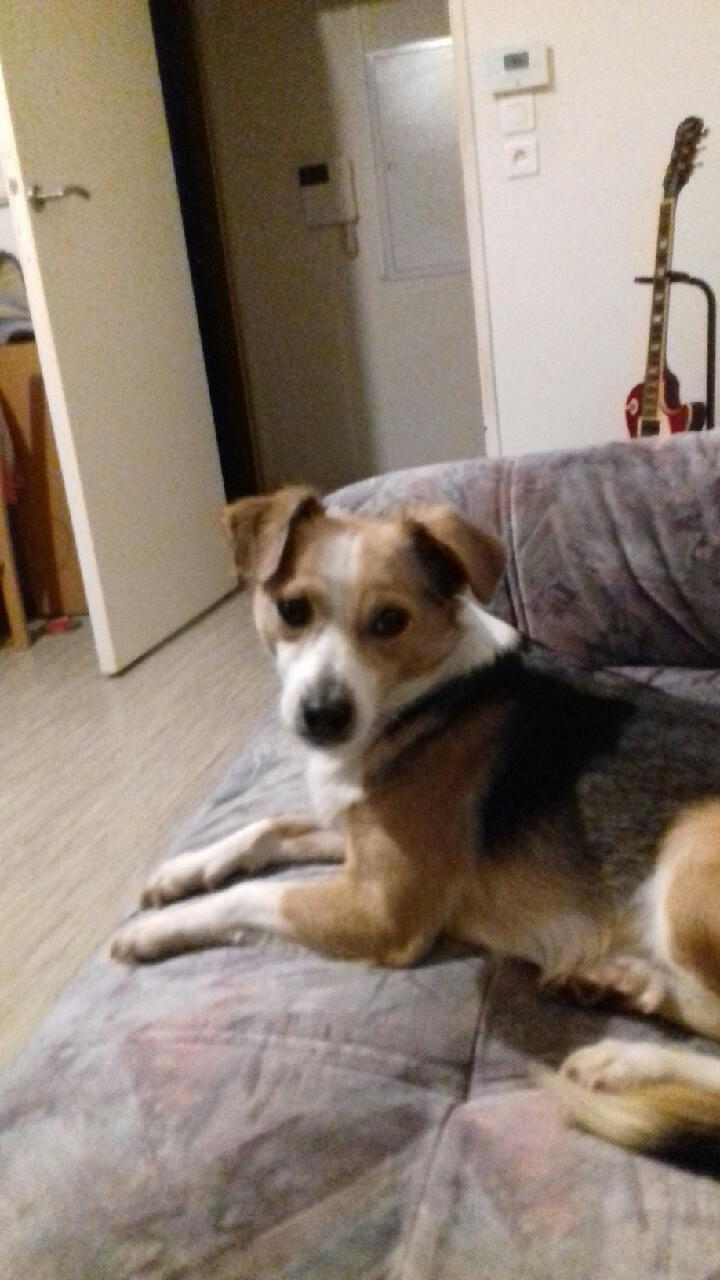 CINCA une petite chienne adorable - SERBIE 20180318
