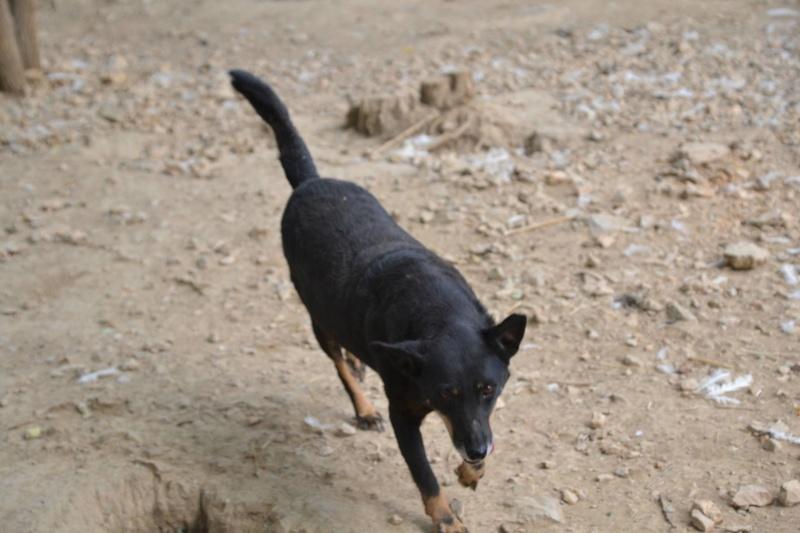 MICI (CRNKA) petite chienne des rues - SERBIE 22472212