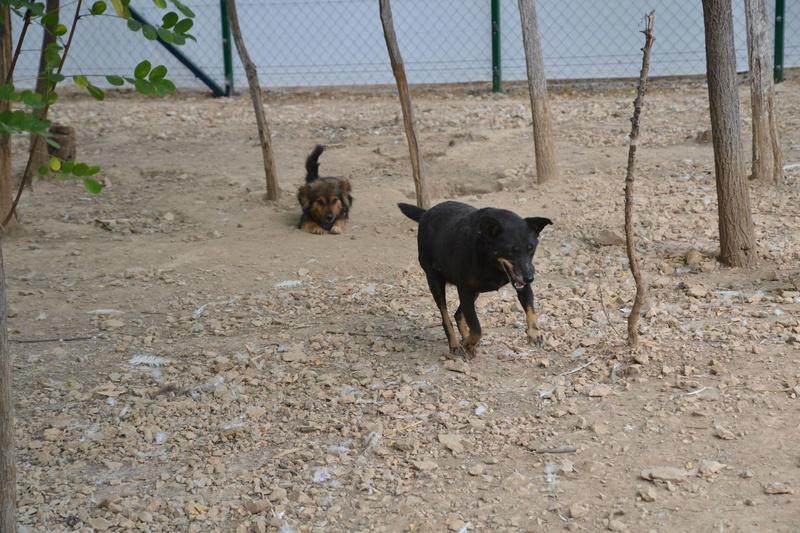 MICI (CRNKA) petite chienne des rues - SERBIE 22473410