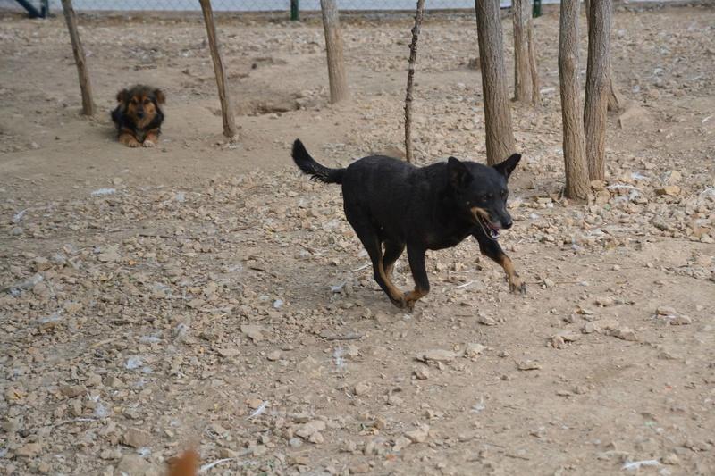 MICI (CRNKA) petite chienne des rues - SERBIE 22553510